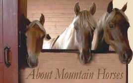 About Mountain Horses